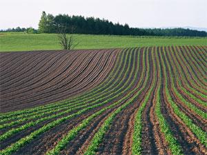 草食系(農耕型)と肉食系(狩猟型)ビジネスとセールス方法