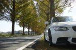 メタセコイア並木道の紅葉、滋賀県へのアクセスや駐車場